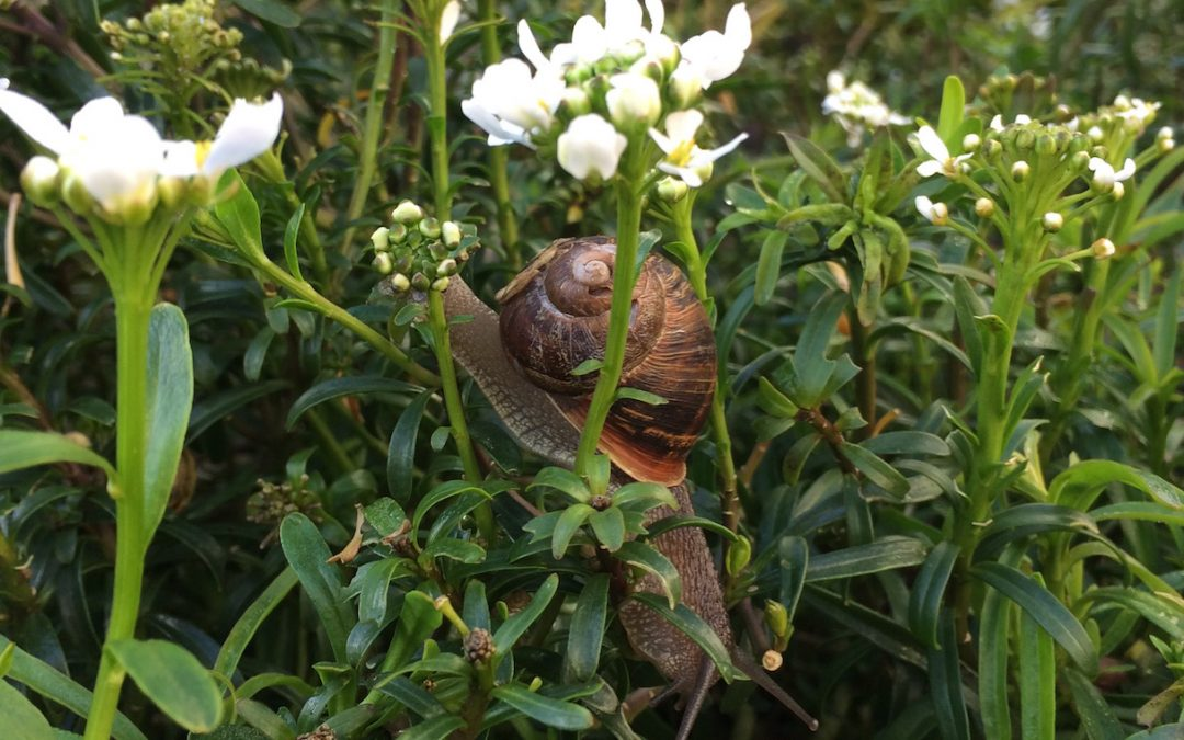 Be the Snail